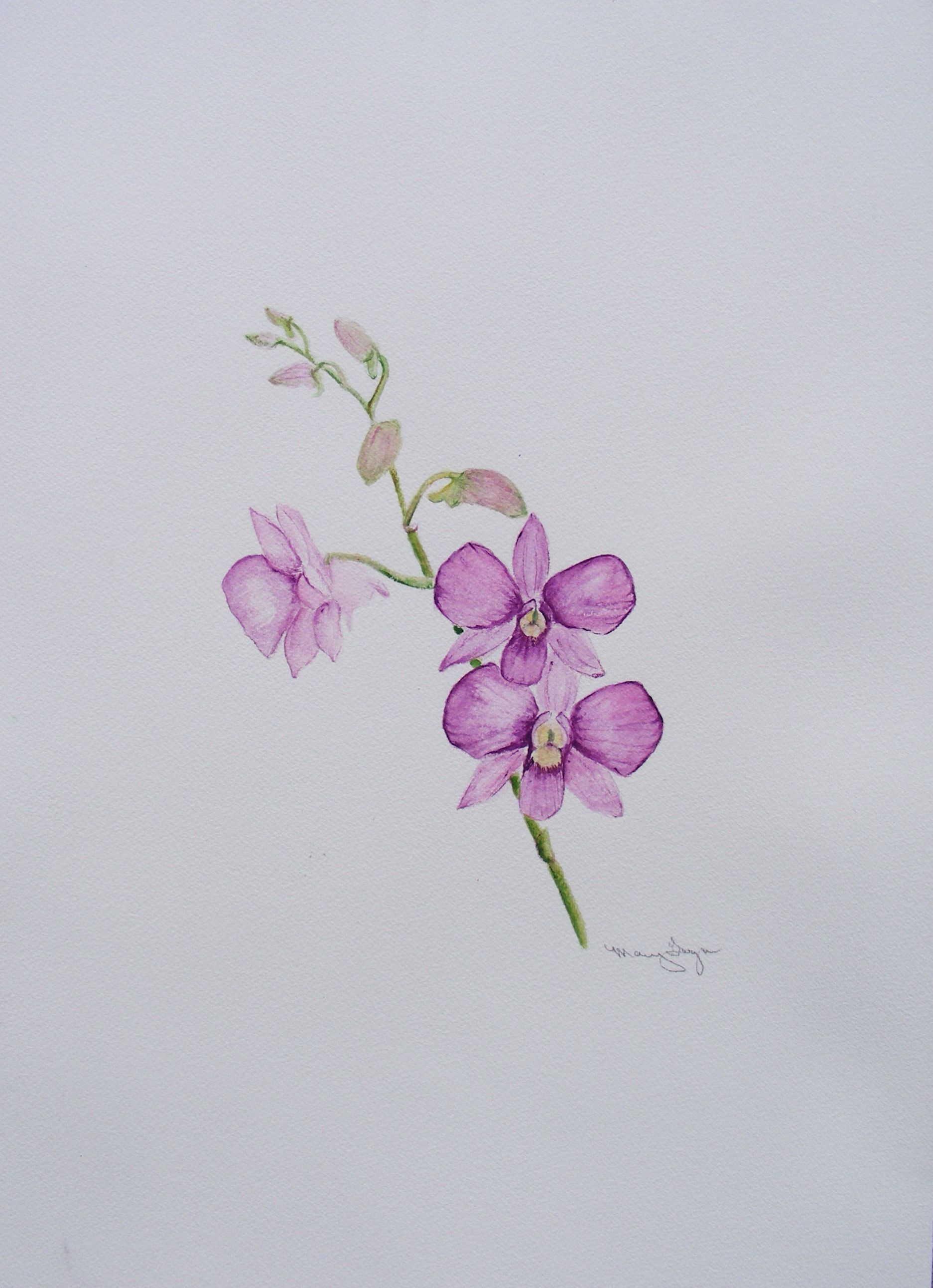 Orchid Drawing Easy