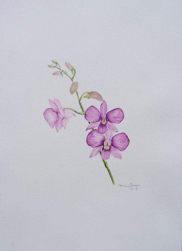 mauve orchid1